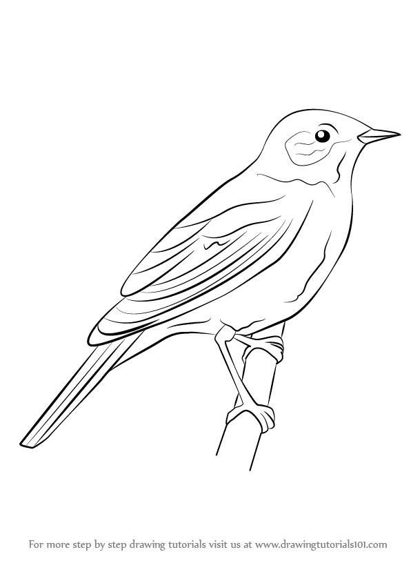 Bird clipart sketch. Learn how to draw