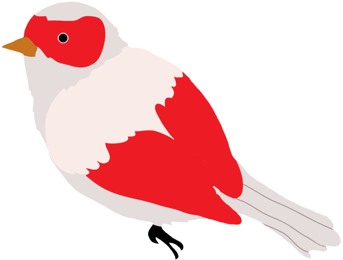 Bird clipart sketch. Colorful drawings of birds
