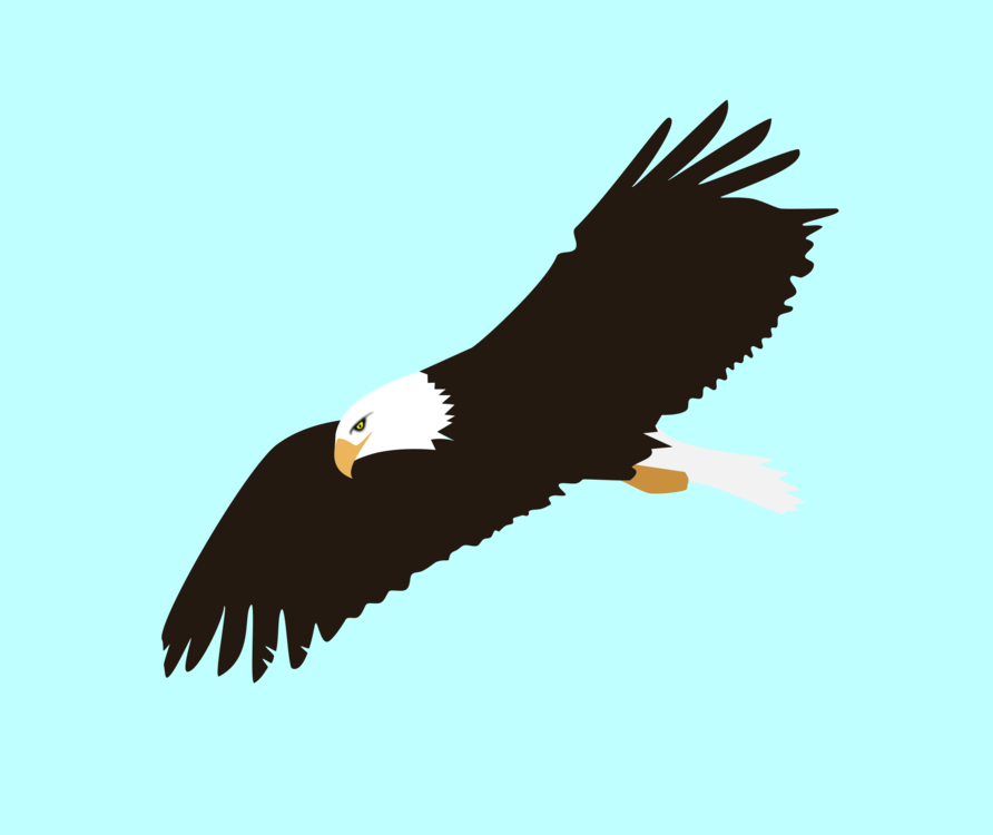 Bird clipart sky. Bald eagle flight download