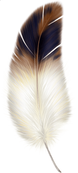 Bird feathers png. Feather guards stop hits