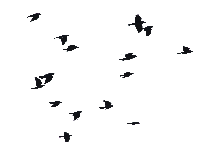 Flying dirt png. Birds image isolated objects