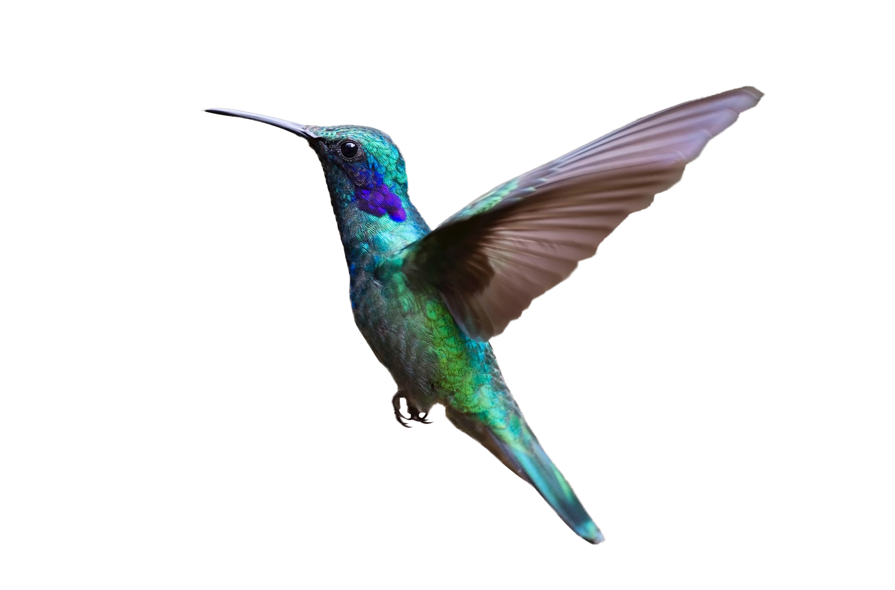 Bird flying png. Colorful hummingbird image purepng