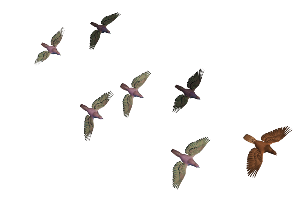 Bird gif png. Flying birds stock by