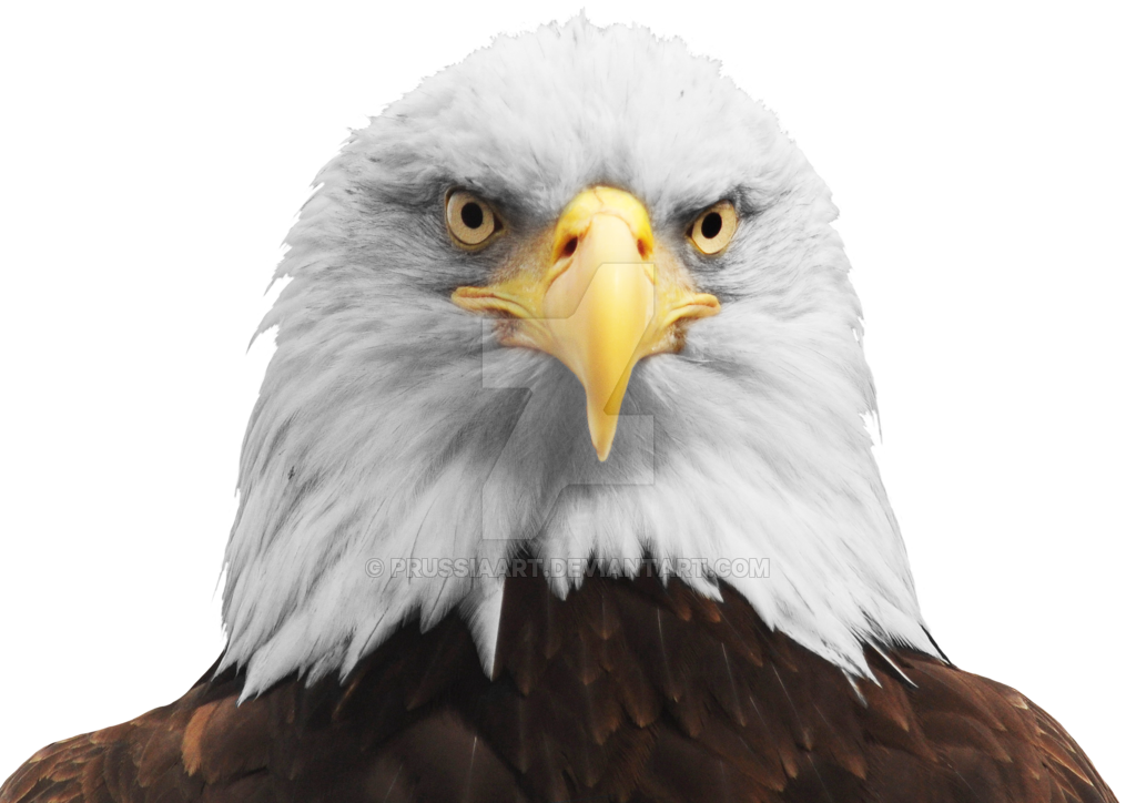 Bird head png. The of an eagle