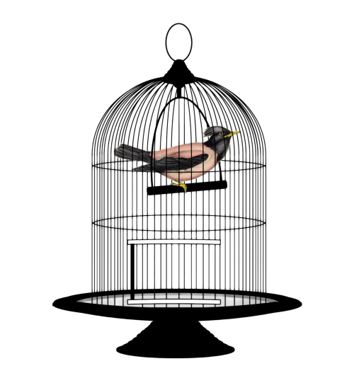 cage png transparent