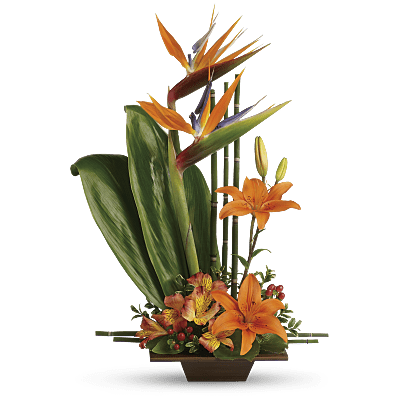 Bird of paradise flower png. Meaning symbolism teleflora shop