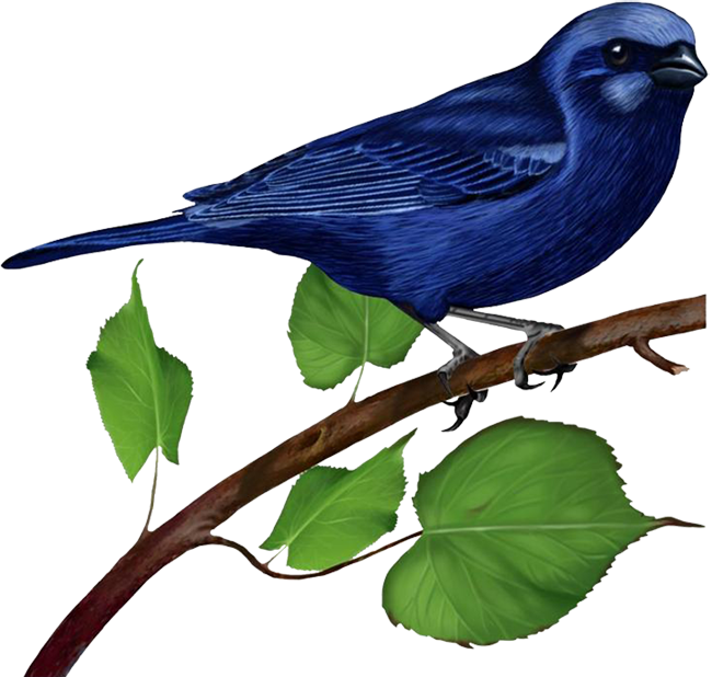 Bird on a branch png. Blue gallery yopriceville high