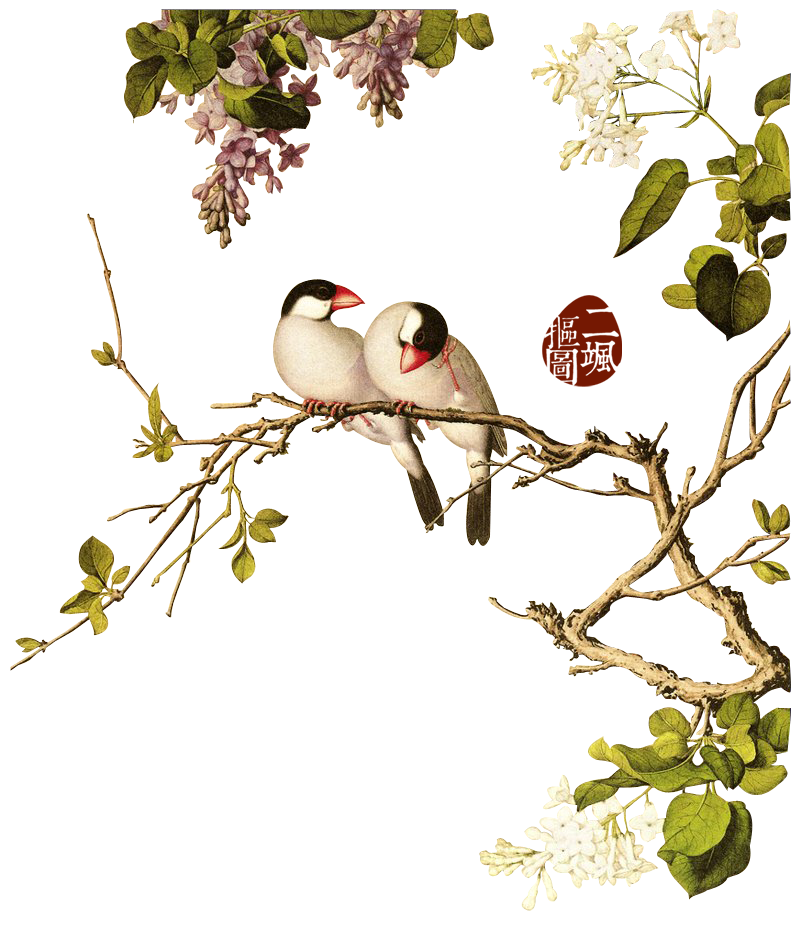 Bird on a branch png. Birds style china not
