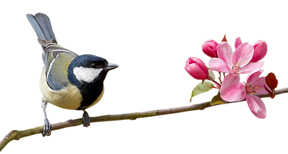 Bird on a branch png. Index of users tbalze