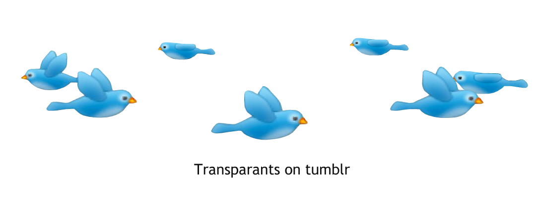 Bird overlay png. Transparants on tumblr shared