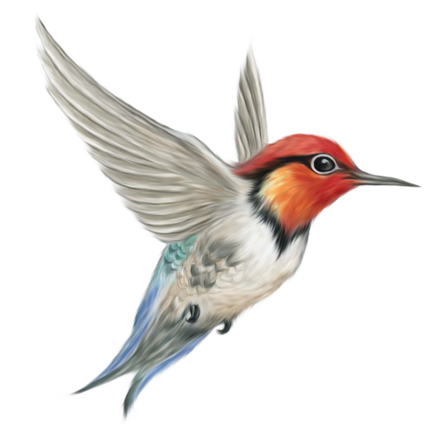 Bird png. Birds images free download