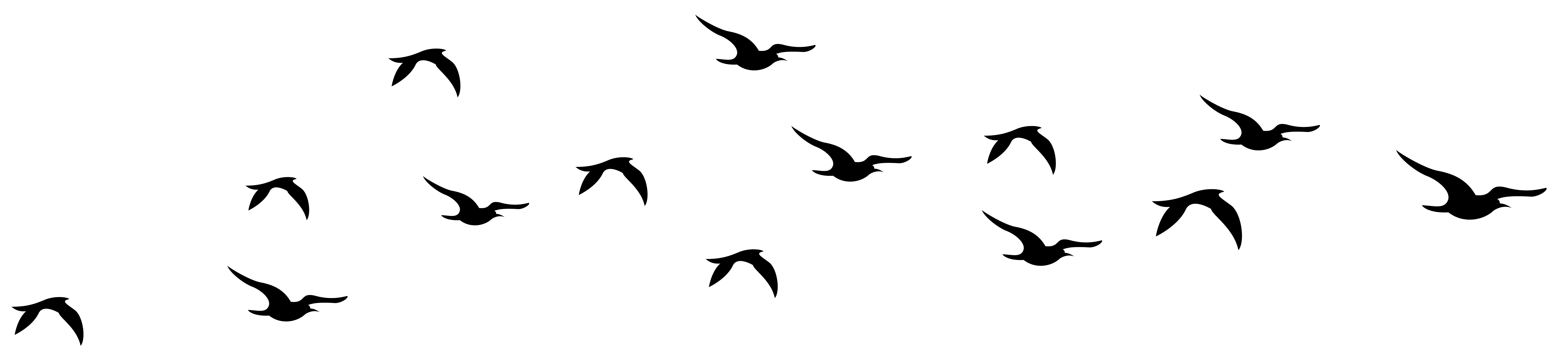 Bird silhouette png. Flying transparent stickpng