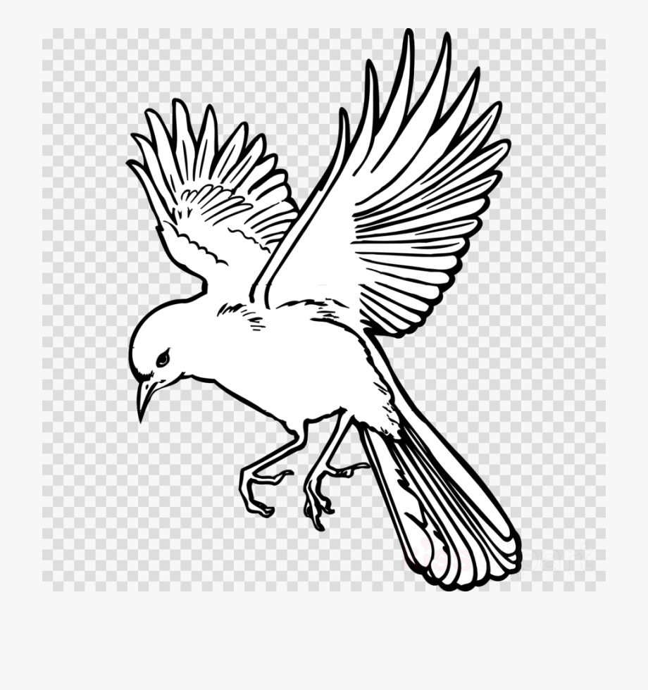 Bird tail. Feather clipart outline flying