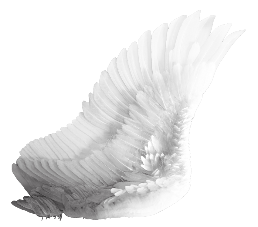Fly wings png. Free images toppng transparent