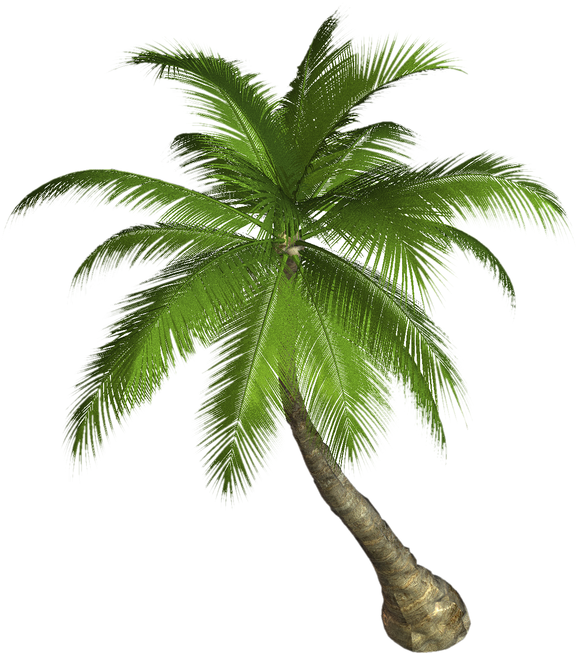 Birds eye view palm trees png. Tree twenty three isolated