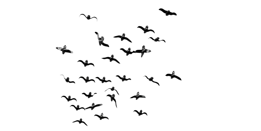 Birds png. Download images background toppng