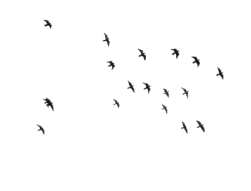 Free images toppng transparent. Birds png vector royalty free stock