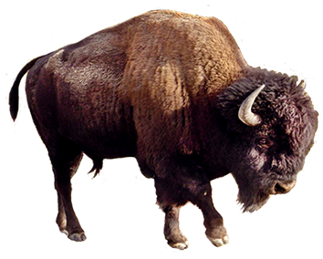 Yak clipart hairy animal. Clip art picture of