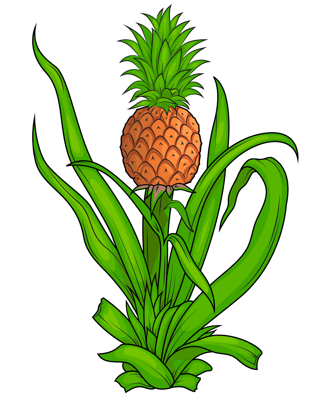 Bitter pineapple. Plant clipart free download