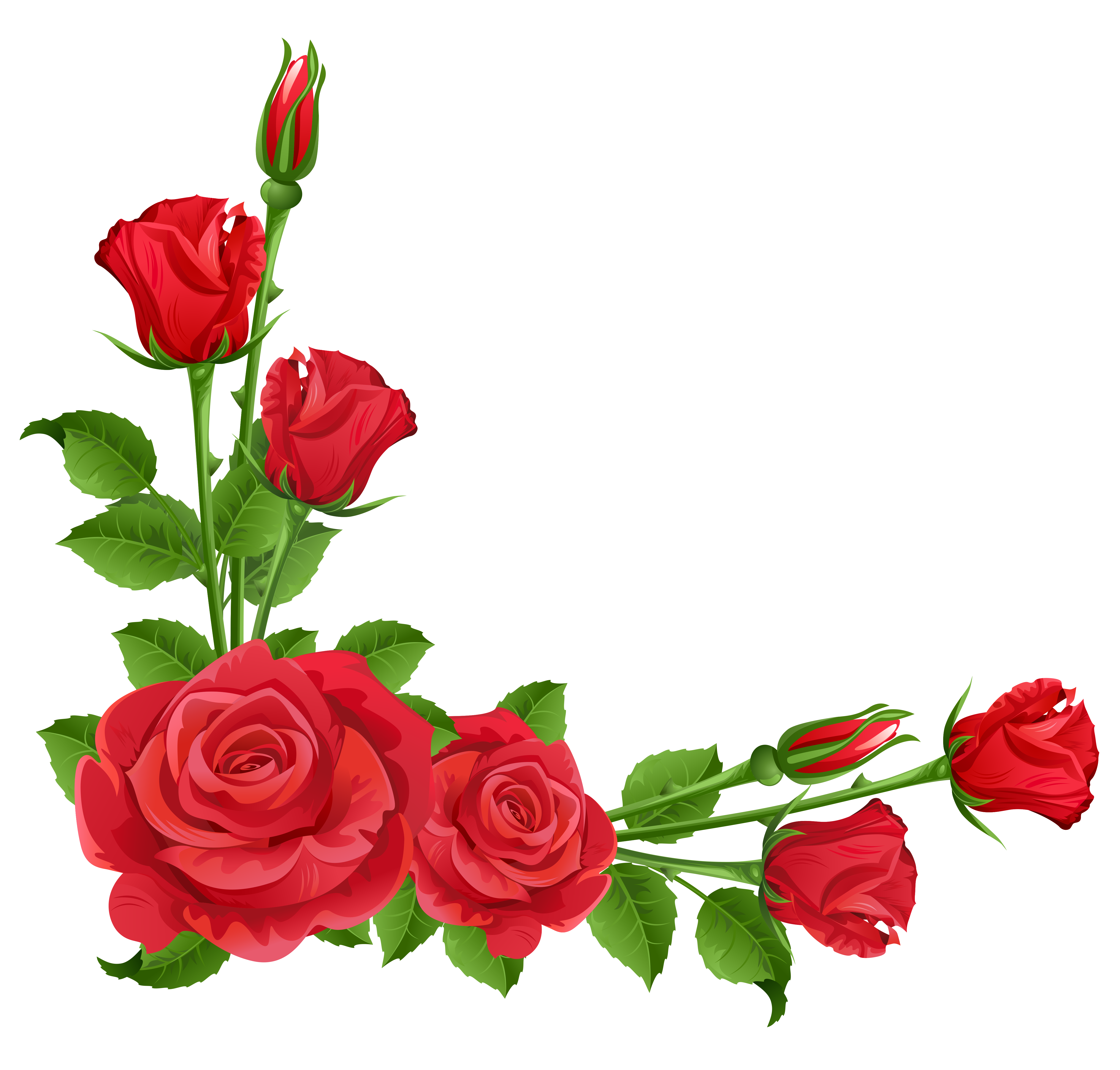 Rosas rojas vector png. Red roses transparent clipart