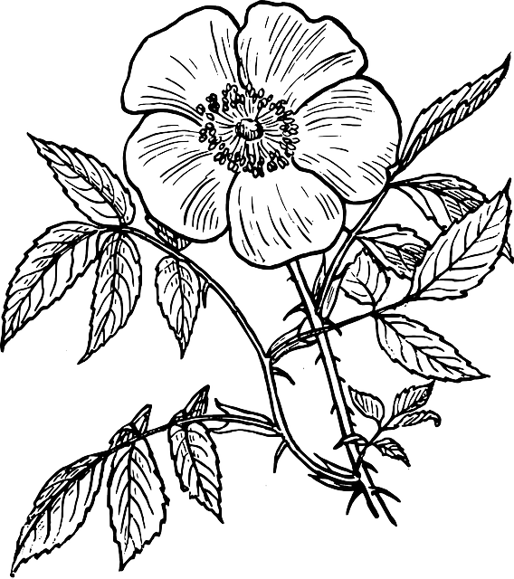 Black and white flowers png. Image outline drawing plants