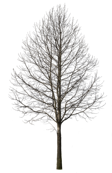 Black and white trees png. Deciduous tree winter i