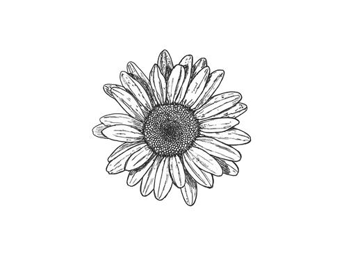 Drawing sunflowers small. Black and white flowers