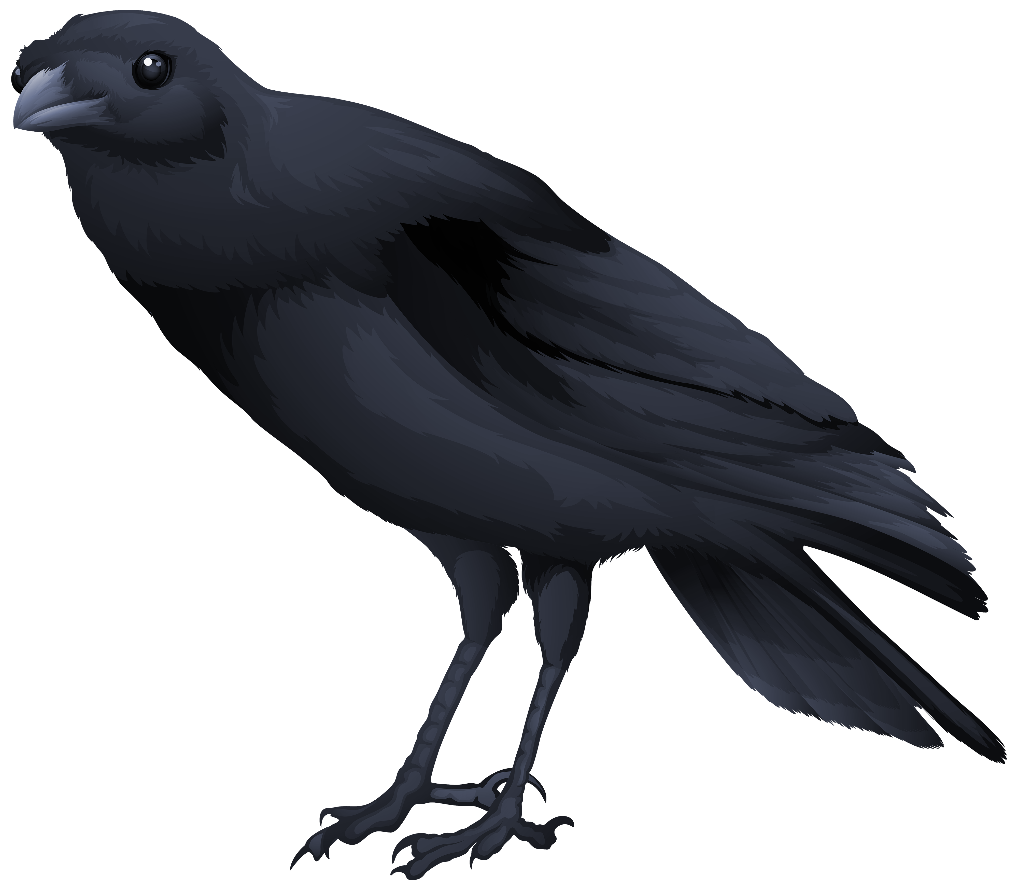 Black bird png. Clipart image gallery yopriceville