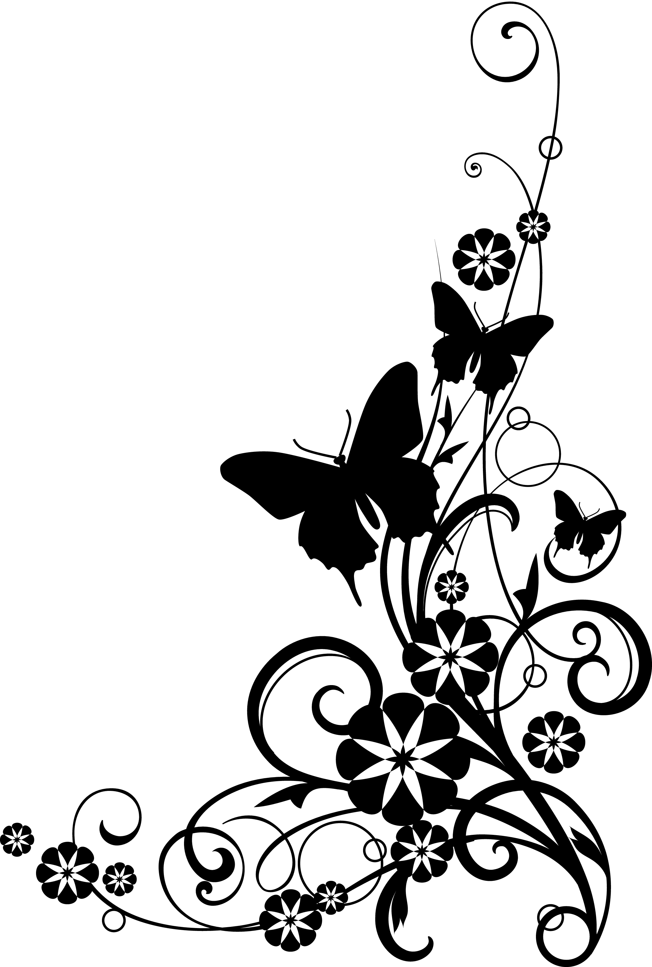 Black border design png. And white flower clipart