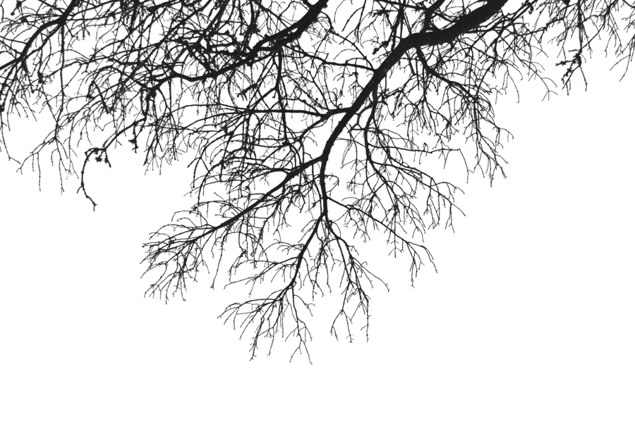 Wood branch png. Transparent images all download