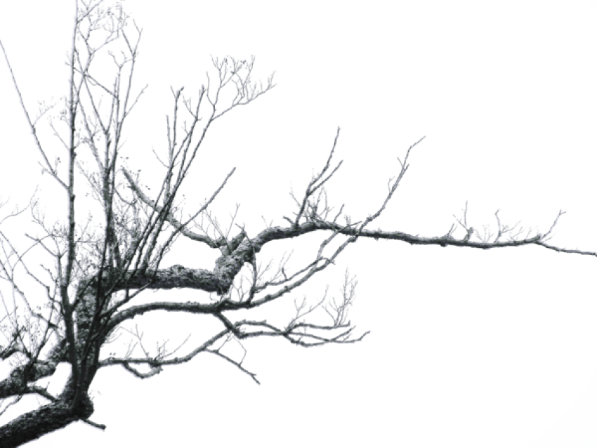 Black branch png. Free images toppng transparent