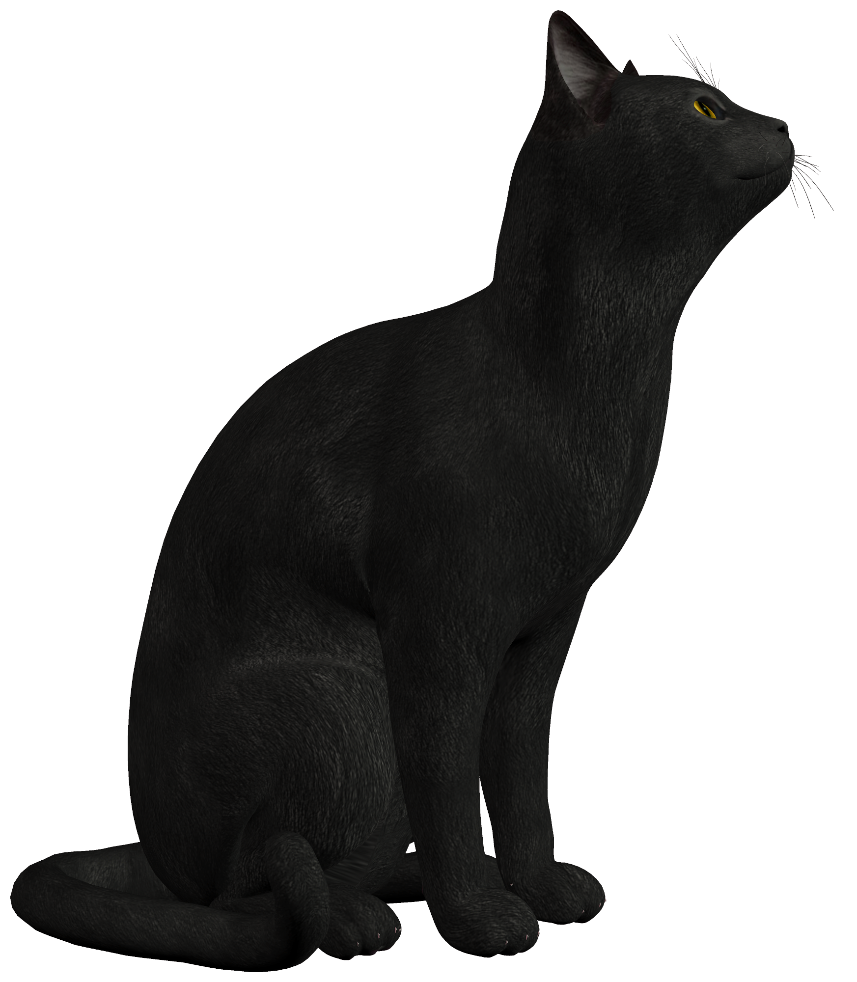 Black cat png. Clipart best web