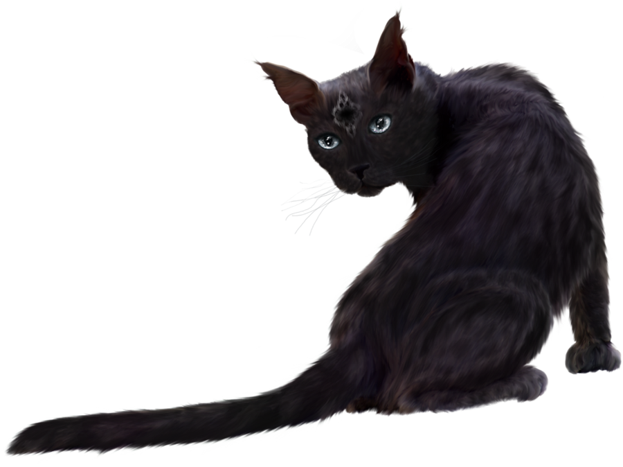 Black cat png. By elly on deviantart