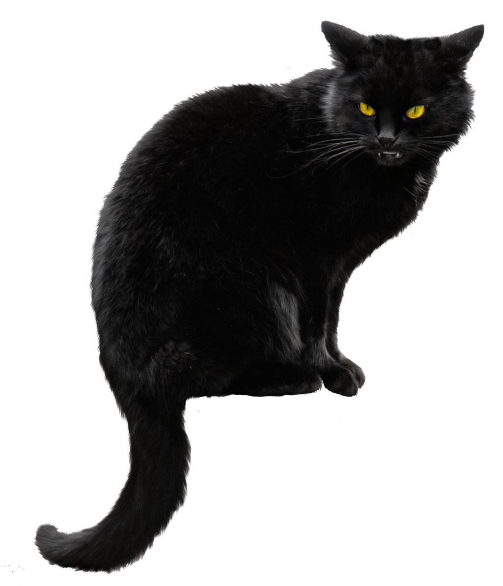 Black cat png. Images transparent free download