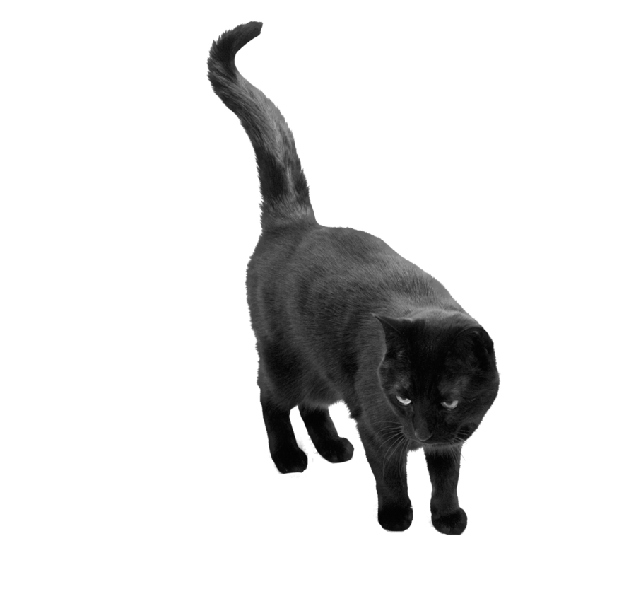 Black cats png. Cat by camelfobia on