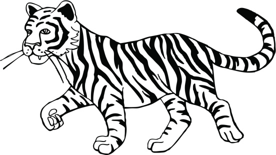 Black clipart white tiger. And clip art library