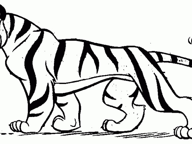 Black clipart white tiger. Vector art and drawing