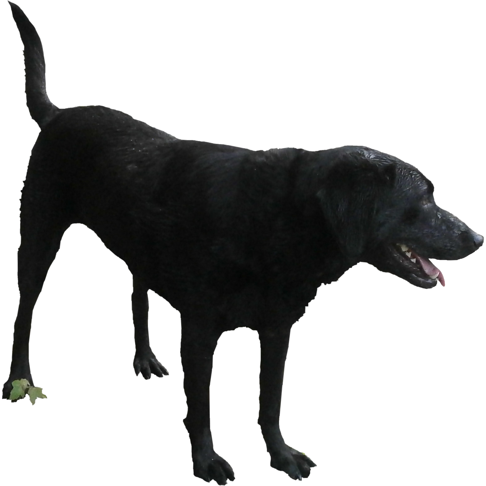 Download full size photoshop. Dogs playing png freeuse download
