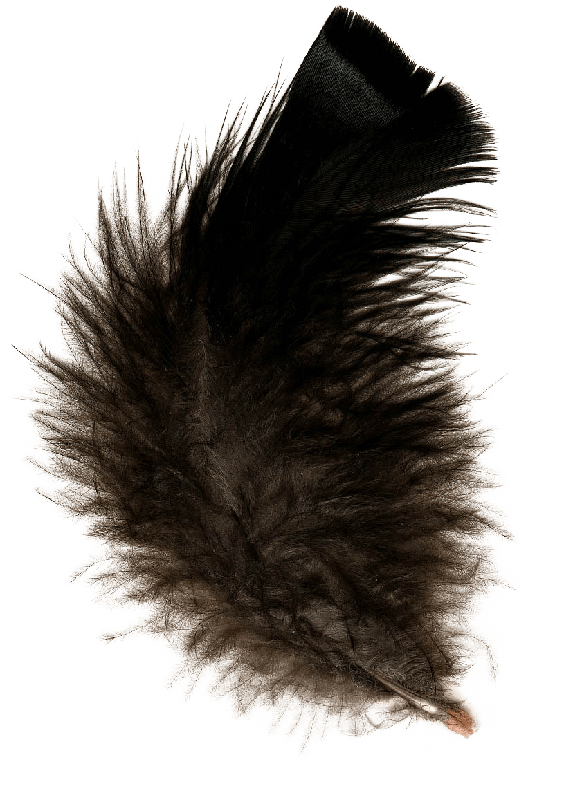 Black feather png. Transparent stickpng nature feathers