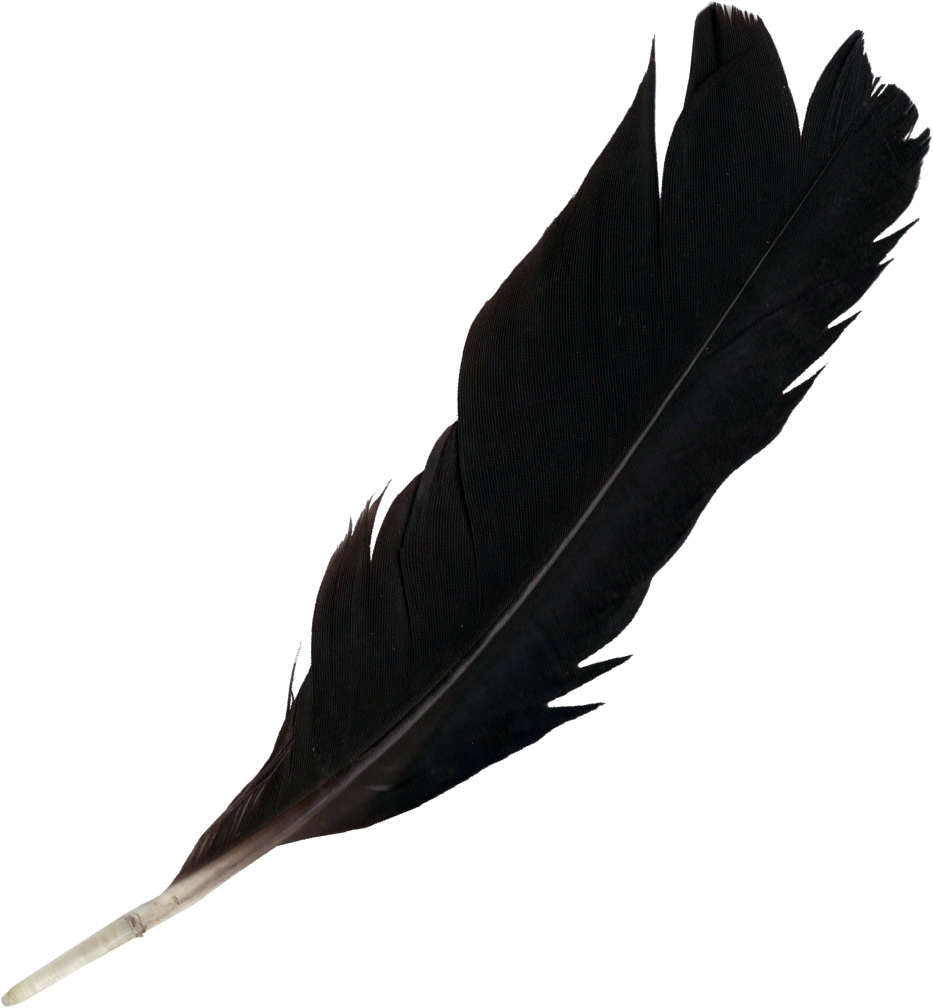 Black feather png. Feathers free transparent images