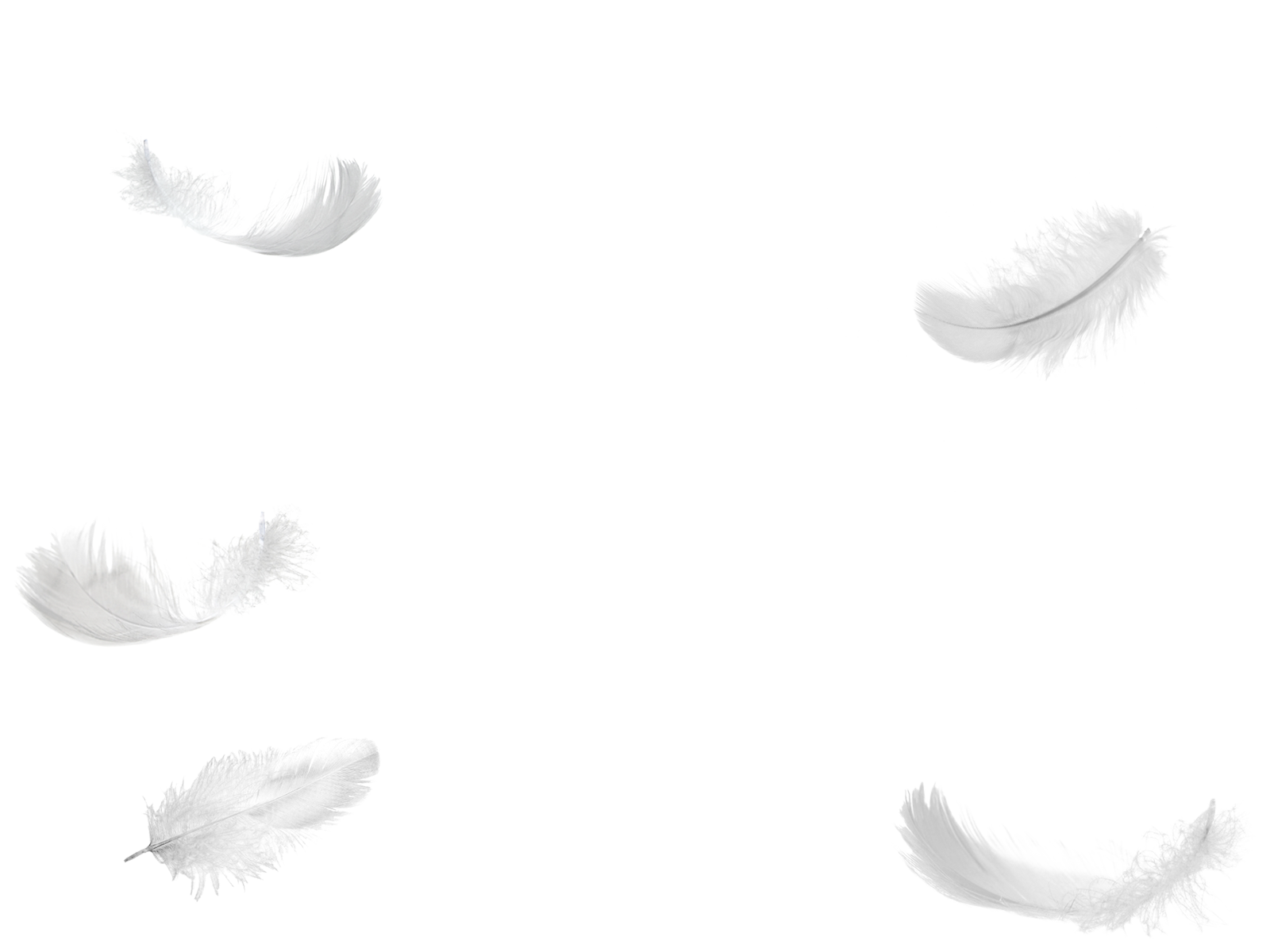 White feathers png. Five falling no background