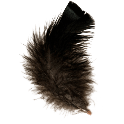 Black feathers png. Light feather transparent stickpng