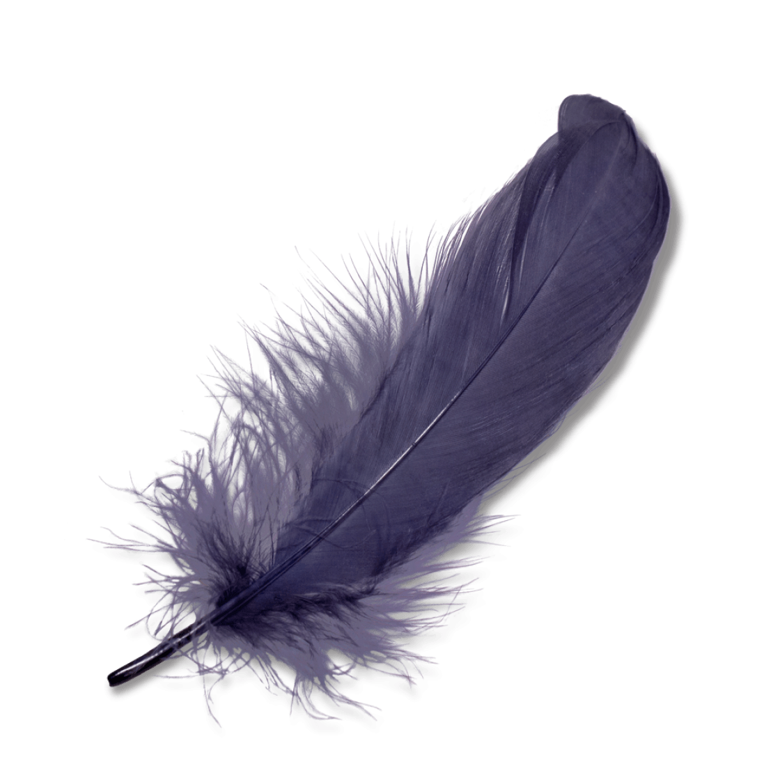 Black feathers png. Purple feather transparent stickpng