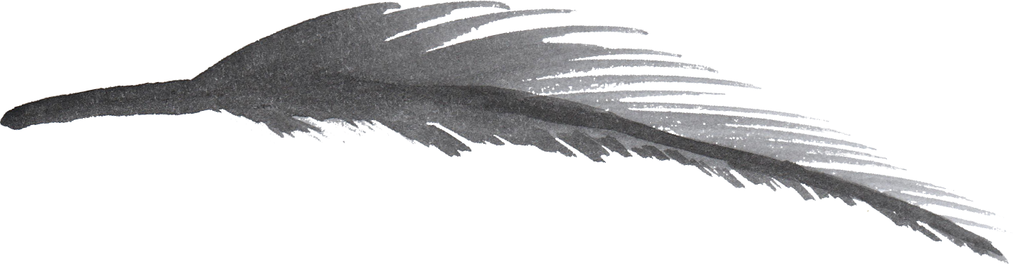 Watercolor feather png. Feathers transparent onlygfx