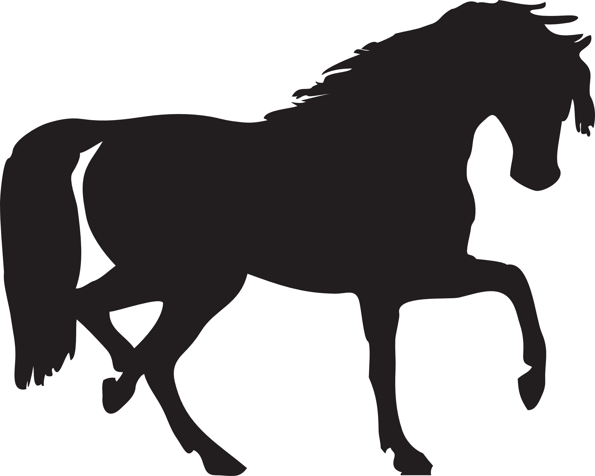 Black horse png. Image without background web
