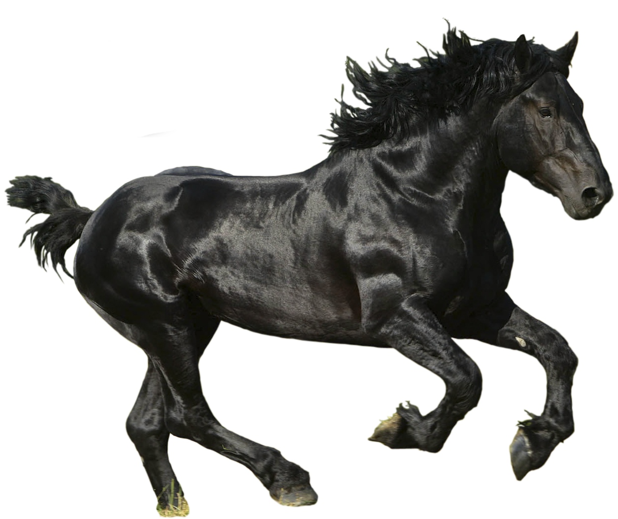 Black horse png. Picture free runing