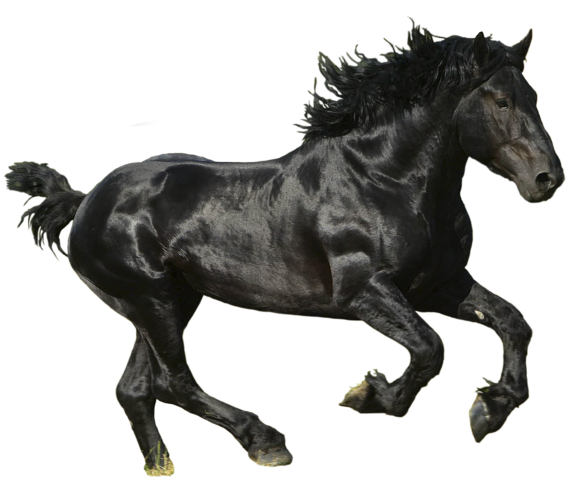 Black horse png. By lg design on