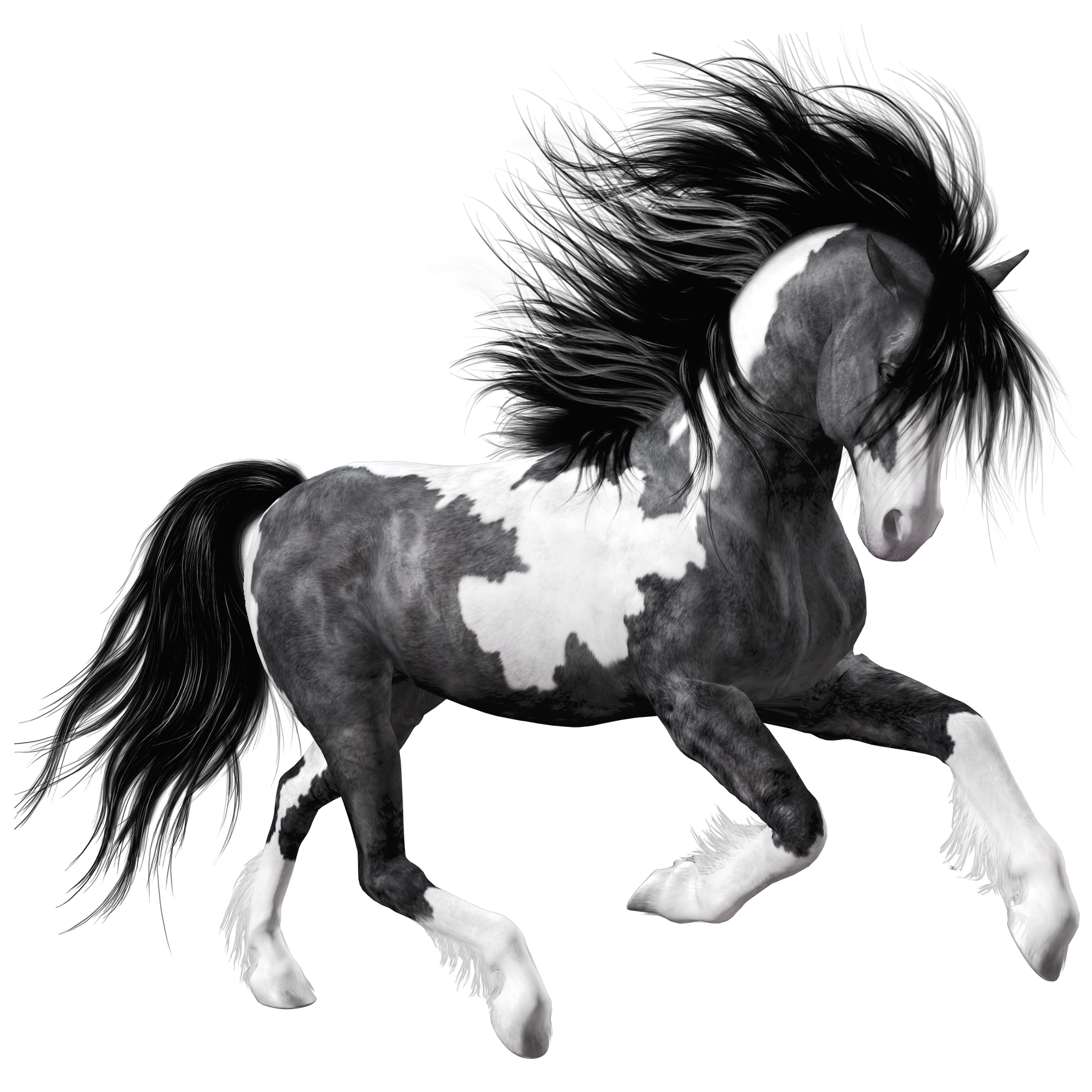 Black horse png. White clipart picture gallery