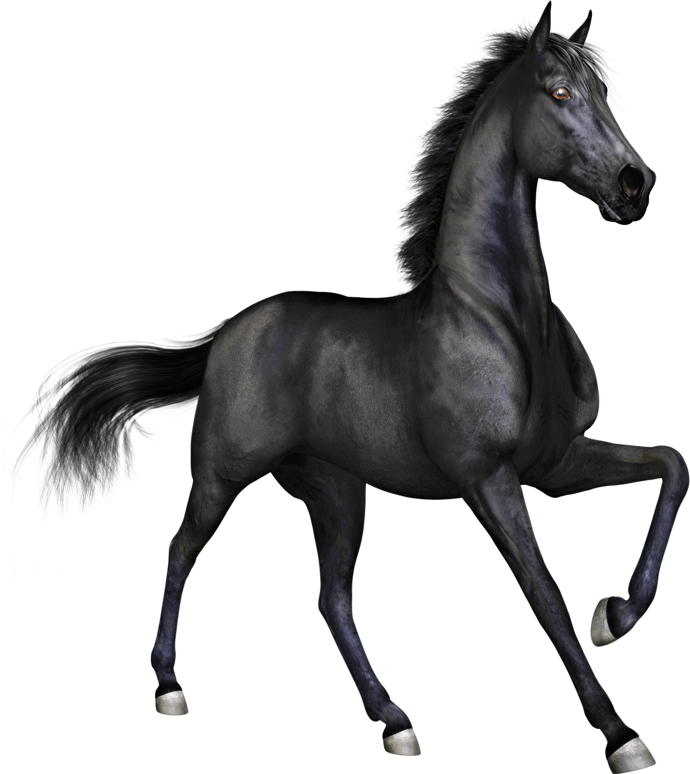 Black horse png. Race transparent stickpng
