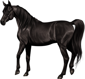 Black horse png. Images in collection page